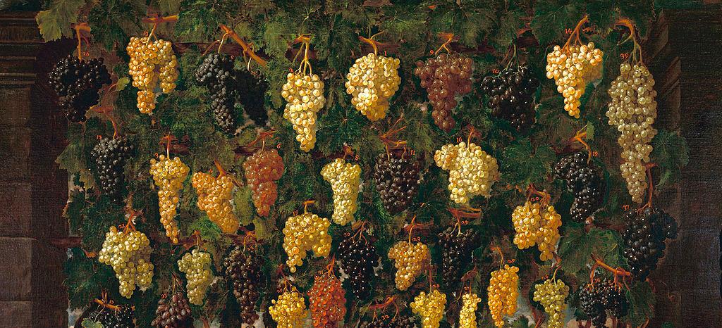 Bartolomeo Bimbi Uva